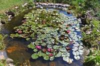 Foto 12 - Der Teich erwacht