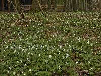 Foto 17 - Frühlingsgeläut am Vichtbach