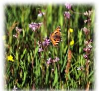 Foto 21 - Impression Frühlingswiese an der Zweifallerstrasse - 1