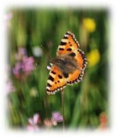 Foto 25 - Impression Frühlingswiese an der Zweifallerstrasse - 5