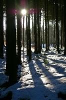 Foto 100 - Schnee und Licht am Hasselbachgraben