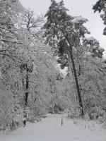 Foto 18 - Struffelt im Dezember