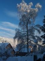 Foto 28 - Schneebirke