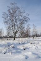 Foto 36 - Winter auf dem Struffelt