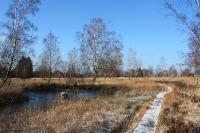 Foto 69 - Winterspaziergang