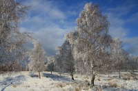 winter_72