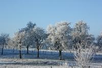 Foto 76 - Winterliche Obstbaumwiese im Morgenlicht