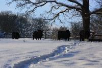 Foto 89 - Schnee bei den Großeltern - 03