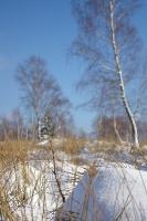 Foto 96 - Wintergräser auf dem Struffelt