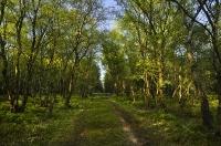 Foto 16 - Maigrün auf der Struffel Heide