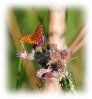 Foto 24 - Impression Frühlingswiese an der Zweifallerstrasse - 4