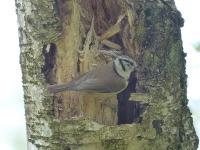 Vogelwanderung-08