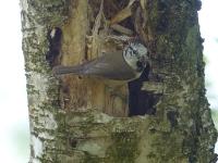 Vogelwanderung-09