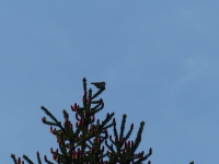 Vogelwanderung-11