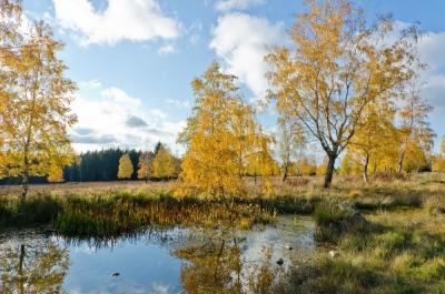 Foto 06 - Auf dem Struffelt im Herbst - 03