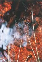 Foto 01 - Spinnennetz