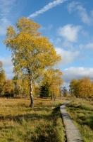 Foto 04 - Auf dem Struffelt im Herbst - 01