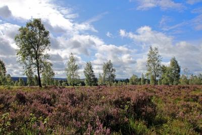 Foto 01 - Struffelt Heide im Spätsommer