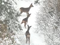 Foto 02 - Haustiere im Winter - 02