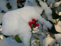 Foto 09 - Der Winter von seiner farbigen Seite