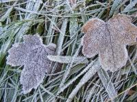 Foto 14 - Eiszeit