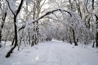 Foto 39 - Schneebogengang zum Struffelt