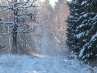 Foto 45 - Im Wald