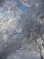 Foto 47 - Eifelsteigweg zum Struffelt