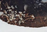 Foto 51 - Eisblumen