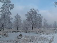 Foto 65 - Winter Struffelt