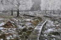 Foto 82 - Eisiges Vergnügen - Raureif auf der Struffelt Heide