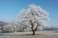 Foto 84 - Der schönste Baum von Rott