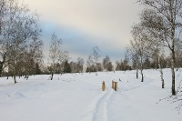 Foto 98 - Winter auf dem Struffelt